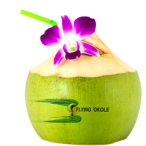 FLYING 'OKOLE drink coconut water branded coconut image on the Branding, Websites & Marketing Our Work page.