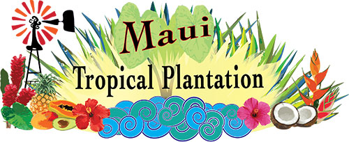 FLYING 'OKOLE branding logo for the Maui Tropical Plantation on the Branding, Websites & Marketing Our Work page.
