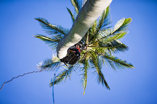 FLYING 'OKOLE marketing commercial photography for Pure Life Palm and Tree Care on the Branding, Websites & Marketing Our Work page.