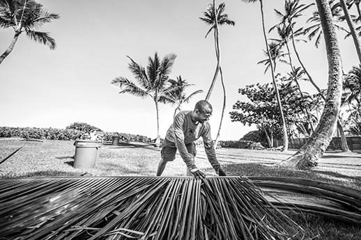 FLYING 'OKOLE marketing commercial photography of impeccable cleanup for Pure Life Palm and Tree Care on the Branding, Websites & Marketing Our Work page.